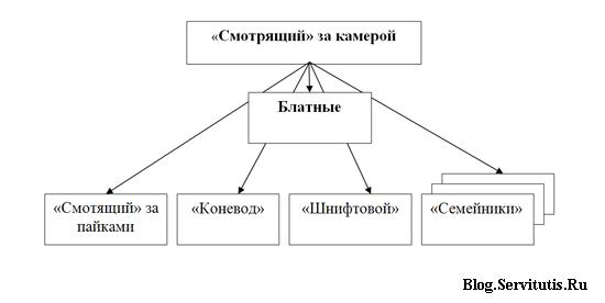 структура криминальной оппозиции действующей в СИЗО России